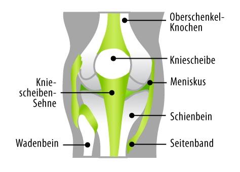 anatomie-knie